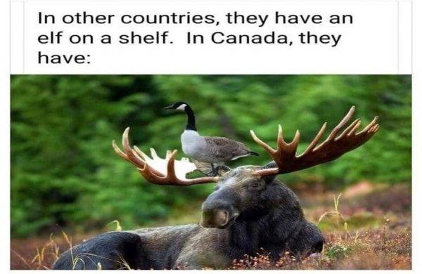 Goose on a moose.jpg